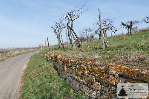 Steinweller (Steinwälle) in den Weinbergen über Schwabenheim