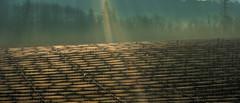 Apple farm sunrise (christos.tsiapalis) Tags: 365 applefarm bodensee sunrays