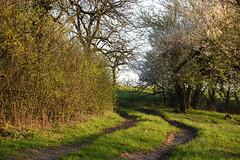 Ode au Printemps (Excalibur67) Tags: nikon d750 sigma globalvision contemporary 100400f563dgoshsmc paysage landscape arbres trees campagne chemin printemps spring frühling