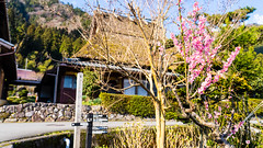 DSC01341 (Neo 's snapshots of life) Tags: japan 日本 京都 kyoto amanohashidate 天橋立 あまのはしだて sony a73 a7m3 24105 伊根