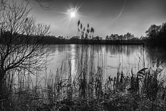 "from my series ""the lake"" (ro_ha_becker) Tags: reflections reflektionen ice lake landschaft landscape see contrejour gegenlicht sunlight sonne sky himmel wolken clouds winter monochrome schwarzweiss zwartwit biancoenero blancetnoir blackandwhite blancoynegro fujix100"