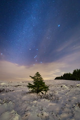 Orion the hunter and winter Milky way (kenthelleland) Tags: irix norge norway jæren rogaland natt night darkness stars nightsky starrysky astroscape astro astrofoto astrophotography orion constellation milkyway universe tree winter wintermood snow mood seasonal canon canonnorge canon6d irix15mm landscapeastrophotography landscape nature nightimage nightshot