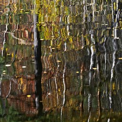 Autumn abstract (Stefano Rugolo) Tags: stefanorugolo pentax k5 pentaxk5 kmount smcpentaxm100mmf28 ricohimaging abstract autumn autumncolors colors tree reflection water lake manualfocuslens manualfocus manual vintagelens hälsingland sweden sverige surreal