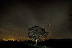The Oak (Rob Pitt) Tags: samyang 14mm f28 stars tree sky clouds wirral cheshire