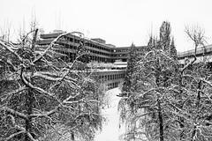 Beautiful brutal (John fae Fife) Tags: eib noiretblanc luxembourg winter bei kirchberg bw nb snow monochrome gardens blackandwhite xe3 europeaninvestmentbank banqueeuropéenedinvestissement fujifilmx