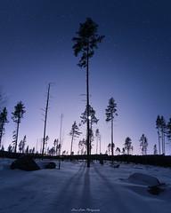 Cold Night (laurilehtophotography) Tags: suomi finland jyväskylä kivilampi night spring stars sky snow ice forest nature landscape nikon d750 sigma 20mm art amazing europe shadows longexposure