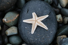 Star of the County Down (akerrzz) Tags: fish star starfish codown ireland beach stones