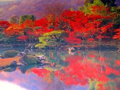 Japón (alfonsocarlospalencia) Tags: jardín japón tokyo zen piedras rojo verde agua meditación octubre serenidad paz árboles río ilusión ensoñación robado belleza efímero sutil exquisito perfección