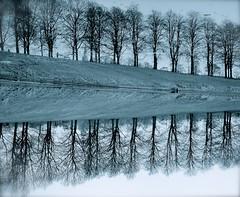 Winter Reflections (Edinburgh Photography) Tags: naturelandscapeoutdoors reflections trees water blue monochrome inverleith park nikon d7000 avril