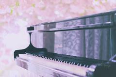 Romance de Amor..... (Jolie ♪ (on/off)) Tags: yashinondx4517 yashinon manualfocus vintagelens piano ritmüller romance amor pink rain