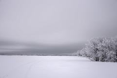 Field and Frosty Trees - DSC_2591a (Markus Derrer) Tags: winter markusderrer manitoba wawanesa frost snow landscape tree hoarfrost