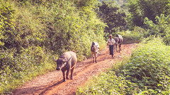 (Laszlo Horvath.) Tags: nikond7100 nikon50mmf18g myanmar burma paotribe nationalgeographic