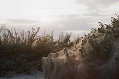 Lebedivka (coastal driver) Tags: prakticamtl3 mtl mtl3 film analog ukraine пленка украина lebedivka lebedevka лебедевка лебедівка kodak kodacolor kodacolor200 colorplus