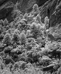 Brush (arbyreed) Tags: arbyreed infrared 665nanometerinfrared monochromeinfrared blackandwhiteinfrared silentcityofrocks cassiacountyidaho blackandwhite bw
