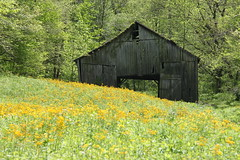 Old Country Barn (krista728) Tags: barn flowers field nature