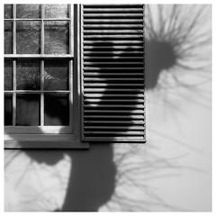 Shadows and reflections (AEChown) Tags: shadows lightshadow reflections tree shutters monochrome blackandwhite window