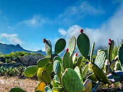 Equilibrio (etoma/emiliogmiguez) Tags: tenerife islascanarias cactus santiago teide oeste higos montañas nubes