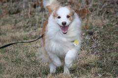 A Good Run (eyriel) Tags: dog pet canine mammal animal happy smile