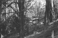 A house in a forest (Matthew Paul Argall) Tags: beirettevsn 35mmfilm blackandwhite blackandwhitefilm kentmere100 100isofilm forest mountdandenong
