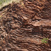 Fault in ribbon cherts (Franciscan Complex, Lower Jurassic-Lower Cretaceous; southern Marin Peninsula, San Francisco Bay, California, USA) 11