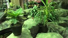 Love Story (Chris Protopapas) Tags: video dinosaur fountain waterfall iphone newjersey chloe lovestory fragrance jungle