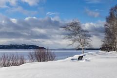 Winter on the Volga / Зима на Волге (dmilokt) Tags: природа nature пейзаж landscape лес forest дерево tree река river dmilokt hanks nikon d850