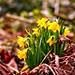Flower Spring Bokeh - 10. März 2019 - Tarbek - Schleswig-Holstein - Deutschland
