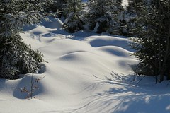 """Mini-Dunes"" de neige qui brillent au soleil. (ViveLaMontagne67) Tags: allemagne germany deutschland schwartzwald forêtnoire nordschwarzwald seebach mummelsee hornisgrinde paysage hiver neige neigevierge immaculée blanc ensoleillée éclats reflets brillance lumière nature sapins dunes bosses ombres shadows firtrees light sunlight shine glints sunny white pristinesnow immaculate snow winter landscape winterscape snowscape 500v20f 1000v40f"