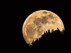 Big moon (lucamarasca1) Tags: laquintaessenza silhouette superluna luna sigma150500 d5500 nikon night explore moon bigmoon