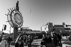 San Francisco's Fisherman's Wharf (alessio.vallero) Tags: sanfrancisco california unitedstatesofamerica us fishermans wharf bay area crab claw chowder clam tourists
