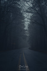 Wet Roads And Fog (Brad Lackey) Tags: rain fog trees forest woods road driving lookoutmountain mentone alabama desotostatepark moody dark lightroom primelens nikon35mmf18g d7200