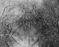 Silver Creek in black & white (flintframer) Tags: indiana landscape bw black white monochrome clark floyd county clarksville new albany silver creek sycamore tree dattilo nature wow canon eos 7d markii ef100400mm water trees winter