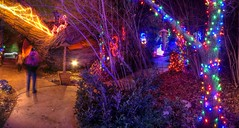 trail to the great pumpkin (JoelDeluxe) Tags: rol riveroflights abq biopark nm december 2018 albuquerque biological park pnm light display colors lights sculptures fantasy newmexico hdr joeldeluxe