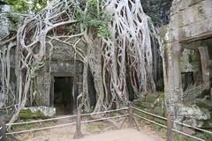 Angkor_Ta Prohm_2014_01