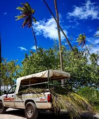 [  T E M A E -  M O O R E A  ] (D. [SansPretentionAucune] (•̪●)  ✪) Tags: moorea polynesia beach palm pacific frenchpolynesia polynesiefrancaise coconuts tahiti lagon