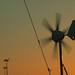 Windy Sunset