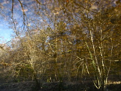 Skeletal (andressolo) Tags: reflection reflections reflejos river río trees skelet water forest agua abstract abstracto nature tea