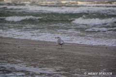 20190101 DIETRICHSHAGEN (21).jpg (Marco Förster) Tags: wolken natur ostsee winter jahreszeiten strand