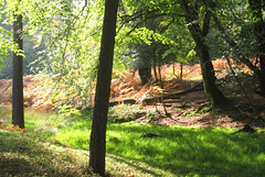 New Forest NP, Hampshire, UK (east med wanderer) Tags: england hampshire uk newforestnationalpark nationalpark lyndhurst holly beech oak bracken