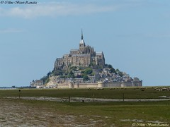 Au Pied du Mont Saint Michel - Manche - Normandie - France - Europe (Céline Bizot-Zanatta Photographie) Tags: europe france normandie manche salt meadows moutons sheep arbres trees rempart ville urbain urban city abbaye abbey architecture bâtiments maisons montsaintmichel lieuxdecultes siteclassé journée extérieur outside printemps seascape landscape iode mer baie monument ngc célinebizotzanatta