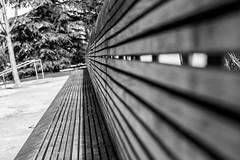 Experimenting with different focal points (BrianLy) Tags: benfranklinparkway photowalk parkbench bench philadelphia fairmount pennsylvania unitedstatesofamerica us