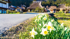 DSC01350 (Neo 's snapshots of life) Tags: japan 日本 京都 kyoto amanohashidate 天橋立 あまのはしだて sony a73 a7m3 24105 伊根