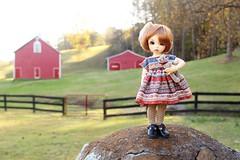 291/365 Whippoorwill Farm (AluminumDryad) Tags: littlefee ltf ante tinybjd bjd balljointeddoll doll resin barn countryside farm teddybear fence etsy etsyshop handmade dolldress dollclothes vintage stripe boho trillianandcompany