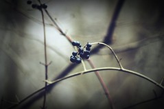 sometimes (undefinable moods) Tags: berries berry branches vignette dof bokeh bokehlicious darkness shadow shades
