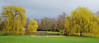 - weeping willows - (Jac Hardyy) Tags: weeping willows willow tree trees green first march sun spring springtime park light salix babylonia erste märzsonne märz grün baum bäume licht pond teich echte trauerweide weide im
