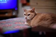 (SusanW<images>) Tags: bokeh nikon 50mm12 buddy cat
