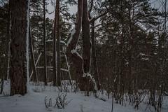 IMG_8781_edit (SPihtelev) Tags: ладога ленинградская область эхо войны берег ладоги озеро зима ladoga