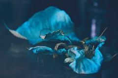 (Dreaming Diva) Tags: poinsettia vintageblue winter film fd creative inspiration purple beauty cottage love serenity blue