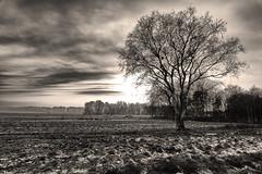 Alone (Zoom58.9) Tags: sky clouds landscape nature grasses trees fields monochrome bw himmel wolken landschaft natur gräser bäume felder sw frost sony europe europa germany deutschland cuxland