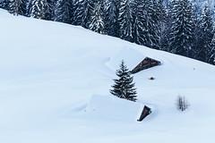 Eingeschneit (Greg_Men) Tags: alpen berchtesgaden berge winter snow outdoor landscape